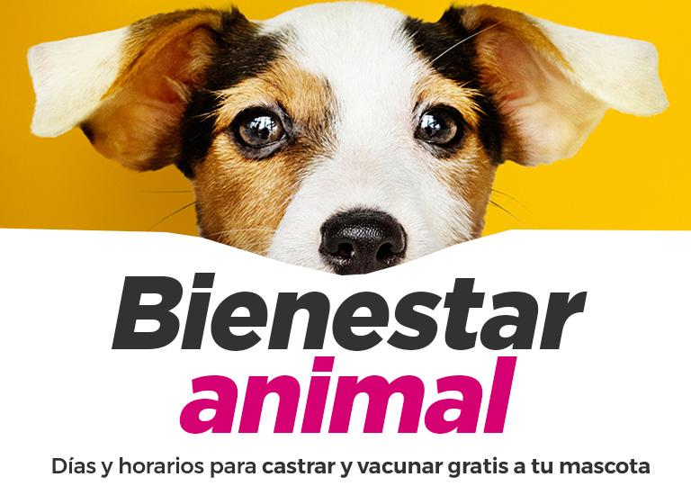 Bienestar-animal-banner