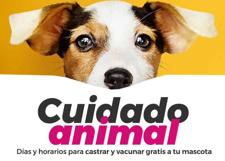 cuidado-animal-acceso