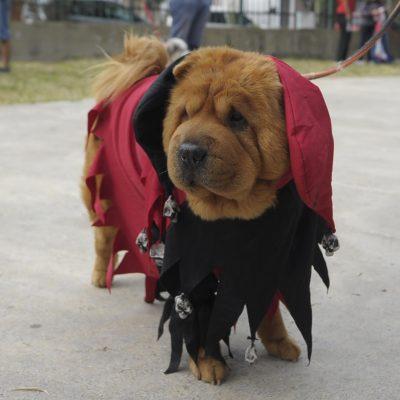 desfile de mascotas 2